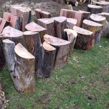 Wood Rats